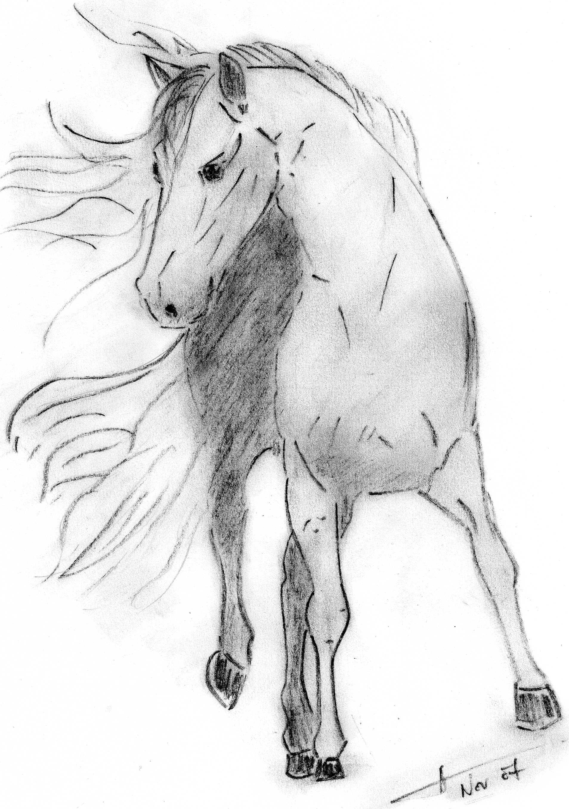 Dessin cheval au fusain art animalier equides - Comment dessiner un cheval au galop ...